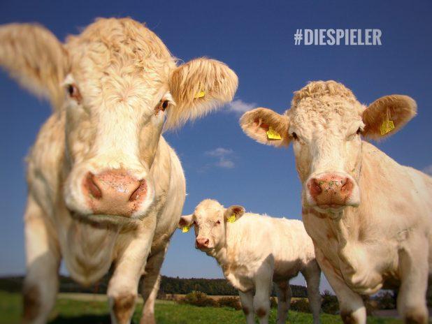 """Drei Kühe """"tagen"""" zusammen auf einer Wiese"""